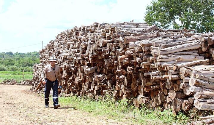troncos-biomasa