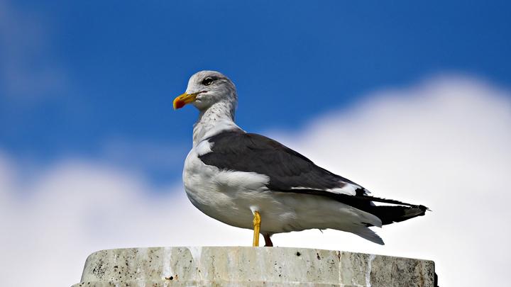 aves-electrificadas