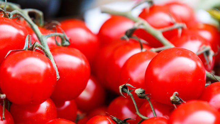 tomates-cultivos