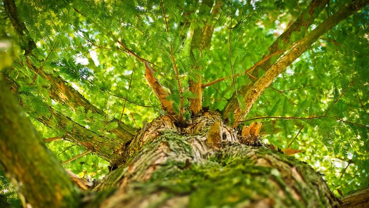 bosques-galicia