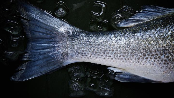 piel-pescado