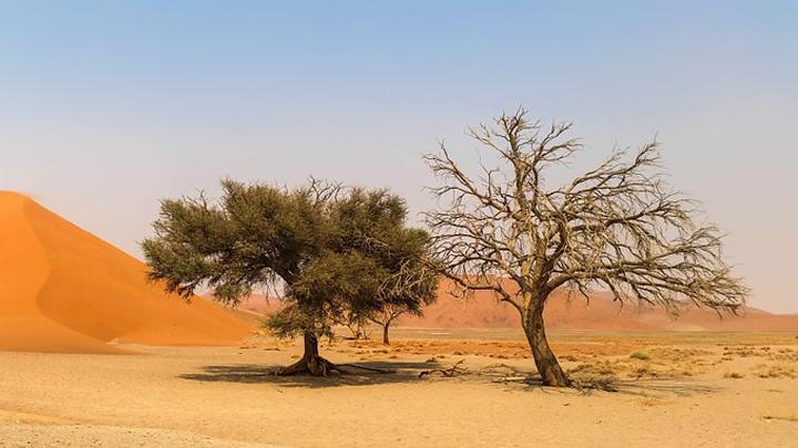 reforestacion-desiertos