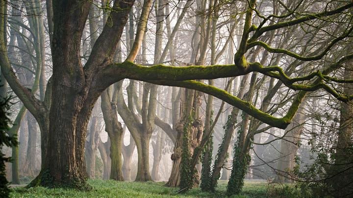 arboles-madera