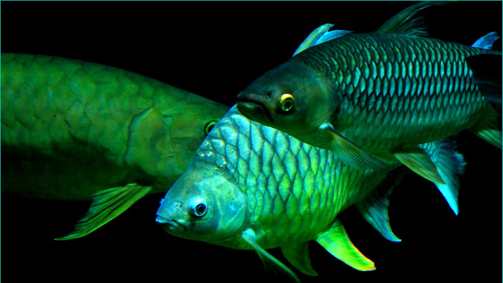 escamas-peces