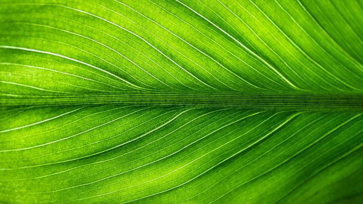 plantas-vivas