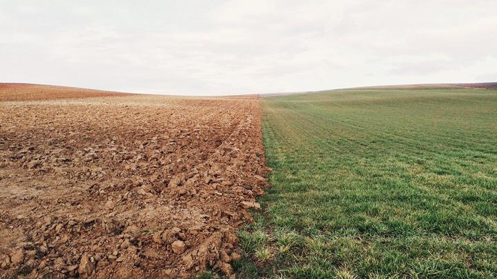 patogenos-suelos