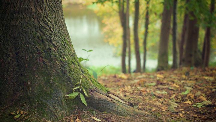 bosques-cenizas-crematorias