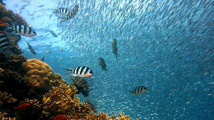 entorno-marino