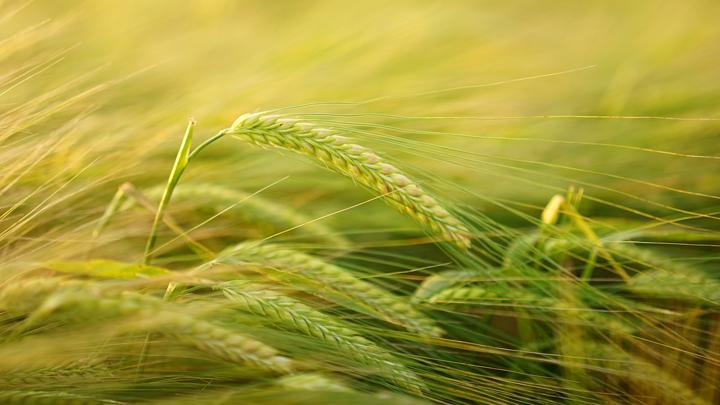 cultivos-pesticidas