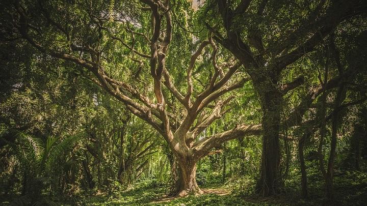 arbol-bosque