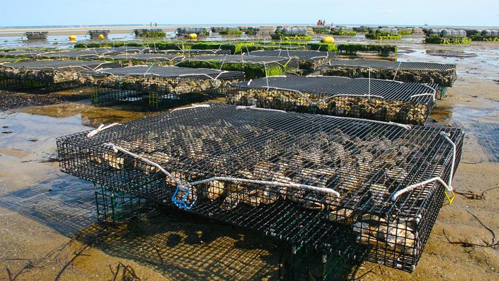 cuerdas-acuicultura