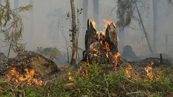 bosques-incendios